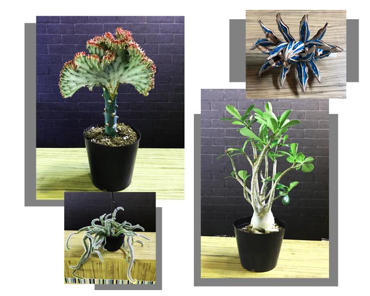 豊富で新鮮な観葉植物を取り揃えています