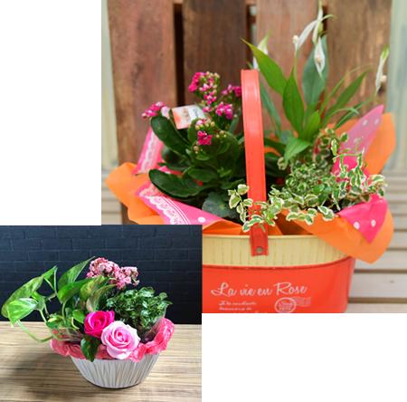 観葉植物と花鉢がカゴの中に入ったアレンジバスケット
