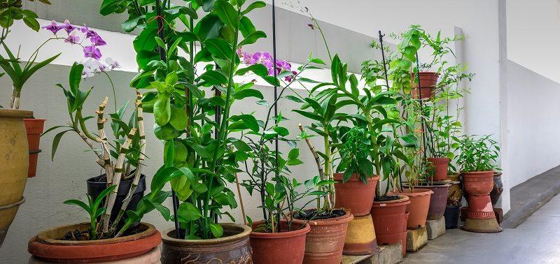 観葉植物レンタルは横浜やみなとみらい地区で盛んです!