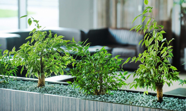 貸し植木(貸し鉢)のオフィス・店舗・個人宅別おすすめ植物と利用の流れをご紹介