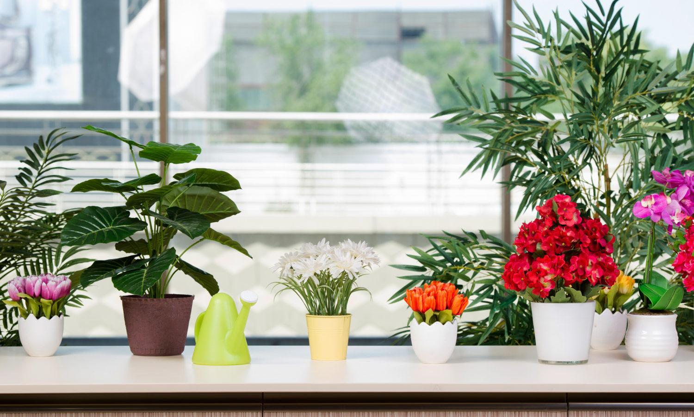 観葉植物を家庭に置くなら?植物のおすすめや育てるポイントなど解説