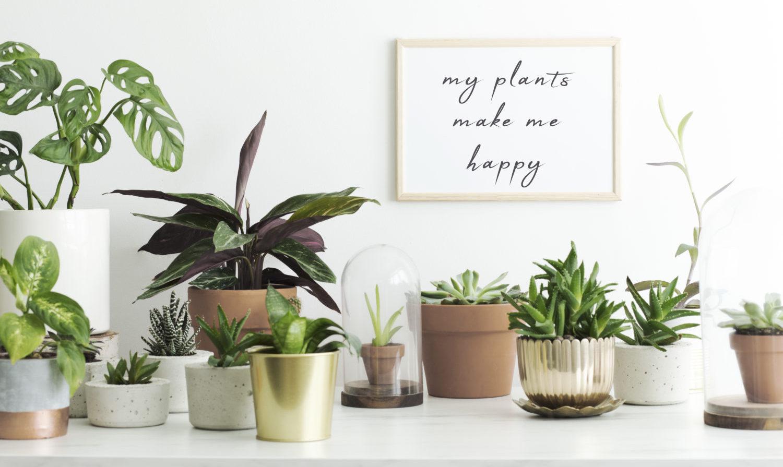 観葉植物をレンタルするメリットやデメリットは?購入との違いも解説