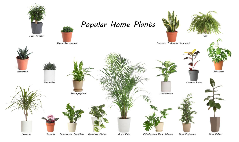 観葉植物をオフィスに飾るなら?選び方のポイントとおすすめをご紹介