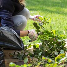ガーデン管理